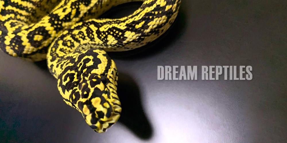 DREAM REPTILES|ドリームレプタイルズ